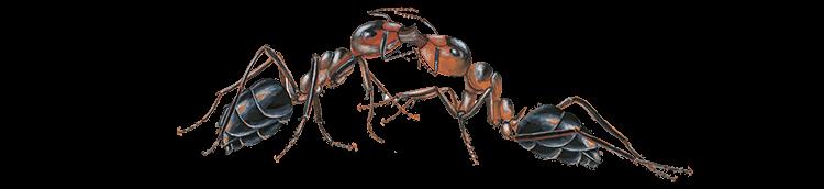 Besonders geschützte Ameisenarten