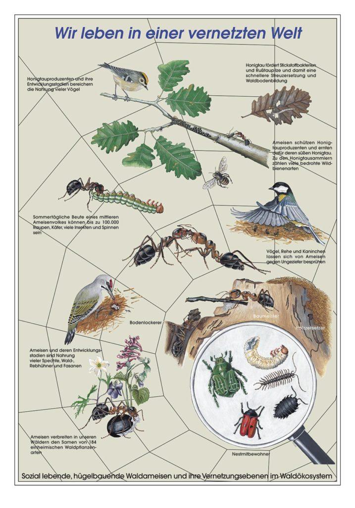 Ausstellung Ameisen